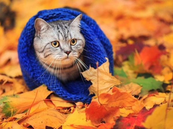 Осенние скидки!!!   Ярмарка Мастеров - ручная работа, handmade