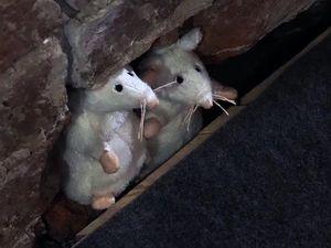 """""""Все мыши любят Сыыыыррррр."""". Ярмарка Мастеров - ручная работа, handmade."""