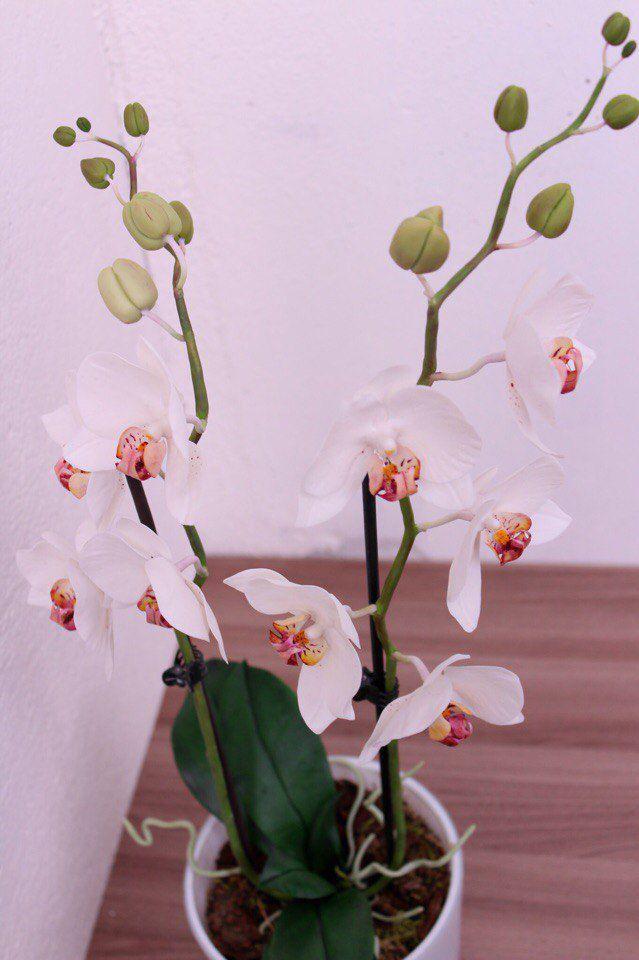 мк фимо, орхидея