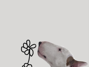 Creative Union: Brazilian Illustrator Rafael Mantesso and His Dog Jimmy the Charming. Livemaster - handmade