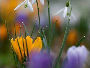 Весна приходит со скидками! Скидка на все готовые работы! Наслаждайтесь покупками! | Ярмарка Мастеров - ручная работа, handmade