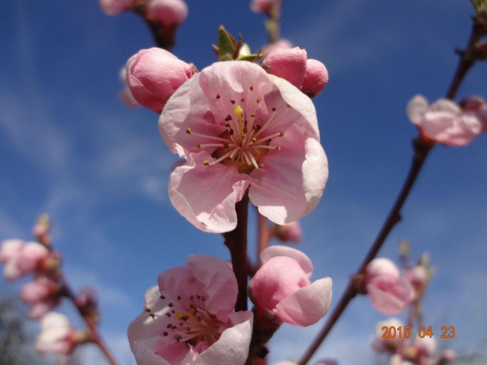 акция, розыгрыш, 2 приза, встречаем весну, обновляемся