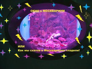 Как в Москвариуме мы ската гладили! | Ярмарка Мастеров - ручная работа, handmade