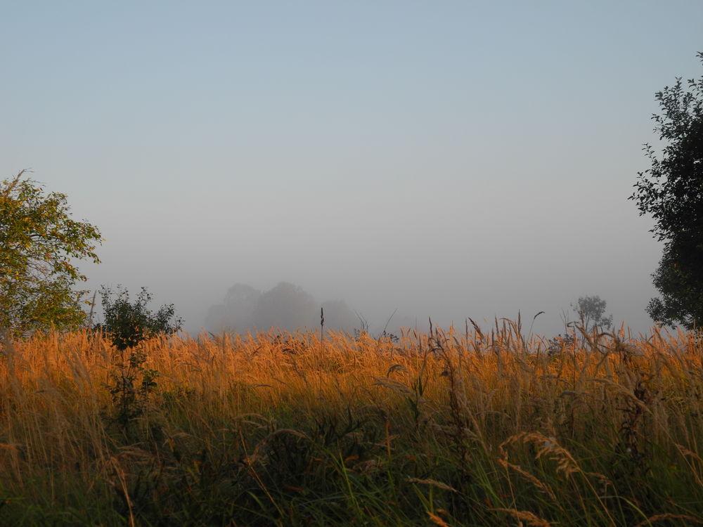 мысли вслух, деревня 21 века, жизнь на фоне природы, забота о земле, гармоничное пространство для ж
