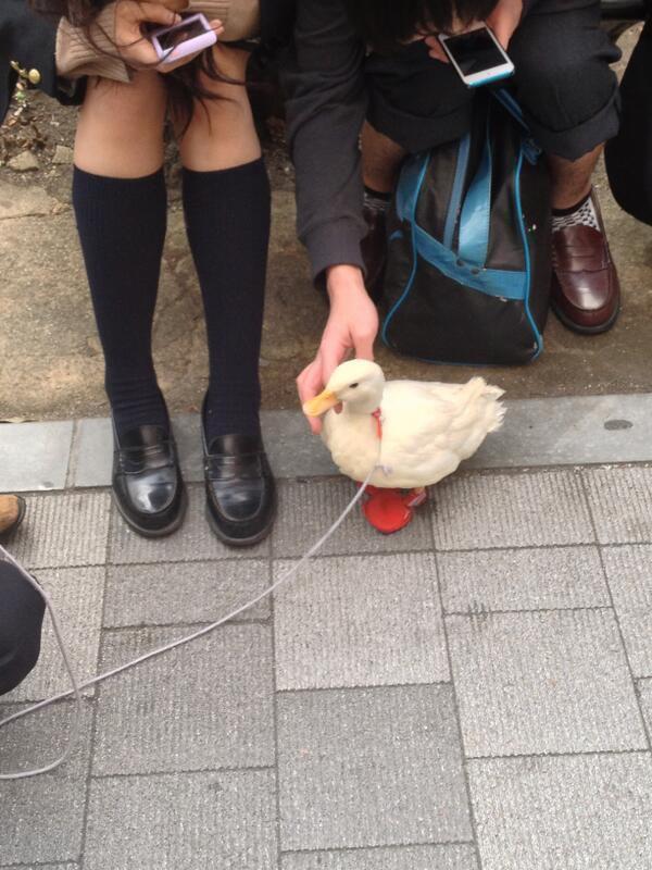 ReasonsToJapan05 25 причин побывать в Японии
