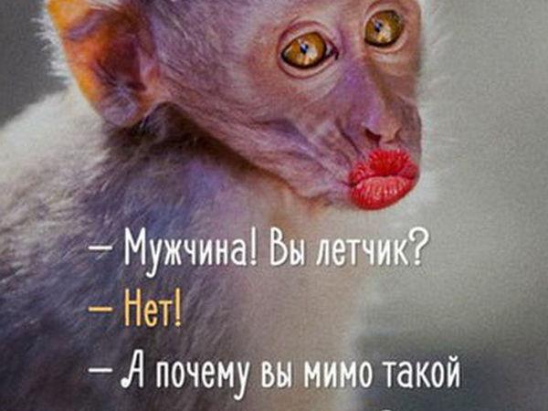 Любопытство - не порок! ))) | Ярмарка Мастеров - ручная работа, handmade