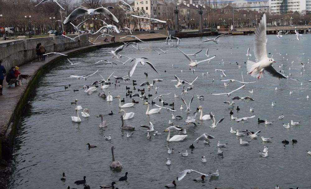 зима, лебеди.