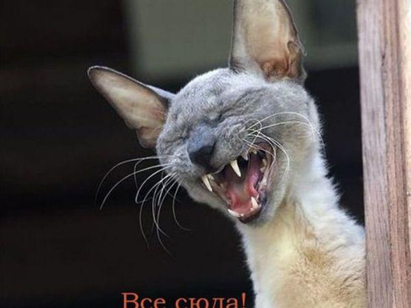 АНОНС аукциона 25-26 октября   Ярмарка Мастеров - ручная работа, handmade