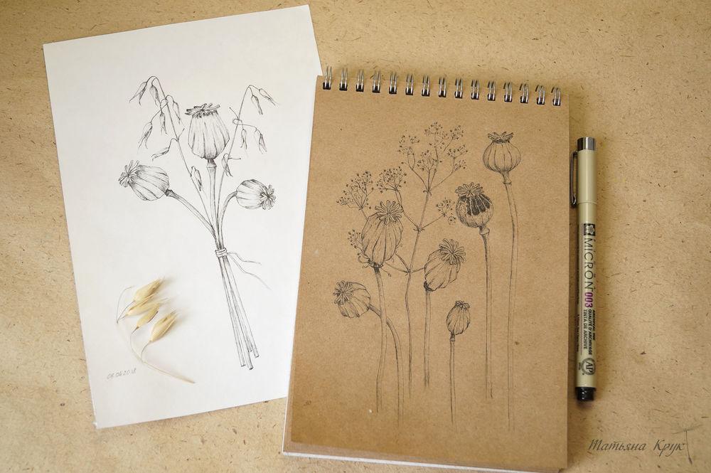 ботанический рисунок, рисовальный опыт
