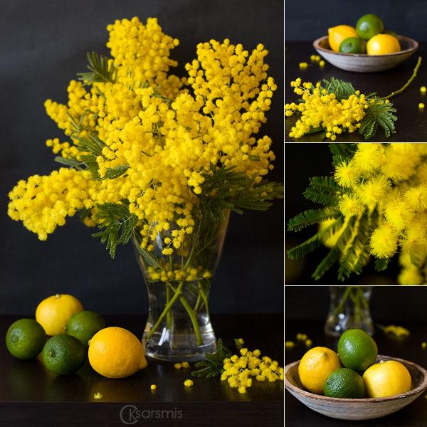 гороскоп, цветочный, мимоза, жёлтый, цветок, февраль