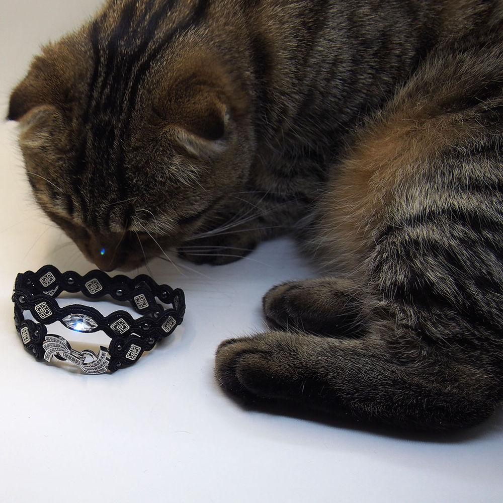 кошки, фотография, домашние любимцы, фотосессия