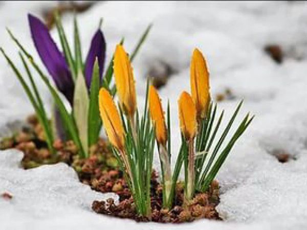 Поздравляем с Весенним праздником!!!   Ярмарка Мастеров - ручная работа, handmade
