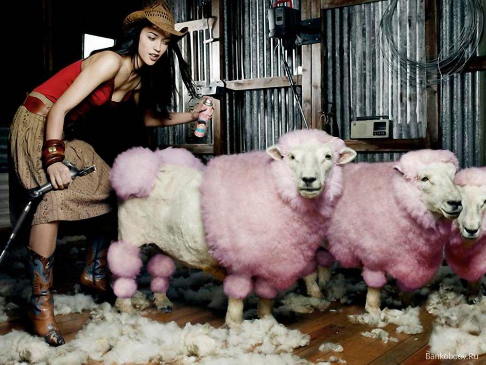 создание шерсти, австралия