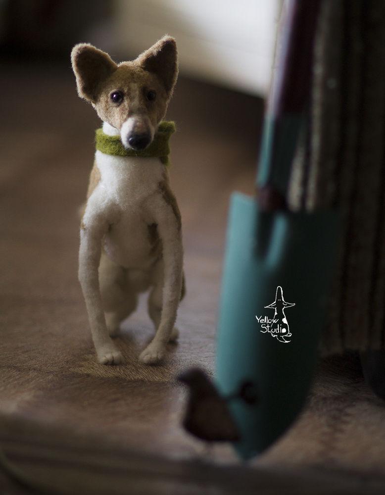 Моня собак, фото № 16