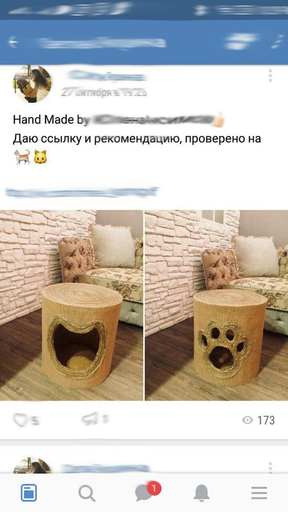 шпиц, кошка