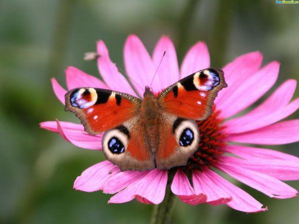 Бабочки | Ярмарка Мастеров - ручная работа, handmade