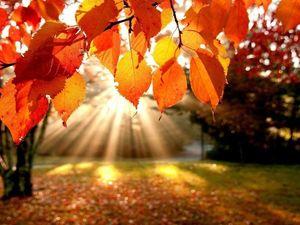 Осенние скидки 30%- 40%. Ярмарка Мастеров - ручная работа, handmade.