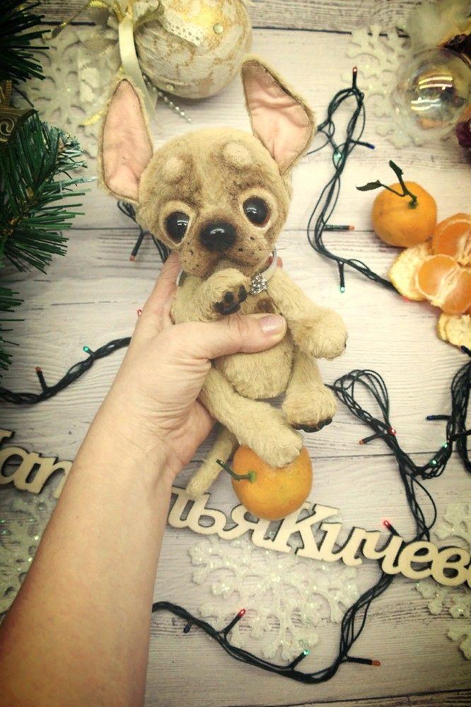 джули, подарок, собака, счастье, тедди собака в подарок