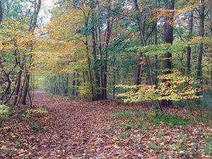 Осення прогулка. Ярмарка Мастеров - ручная работа, handmade.