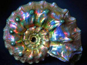 Привет из Юрского периода — красота для ваших украшений. Ярмарка Мастеров - ручная работа, handmade.
