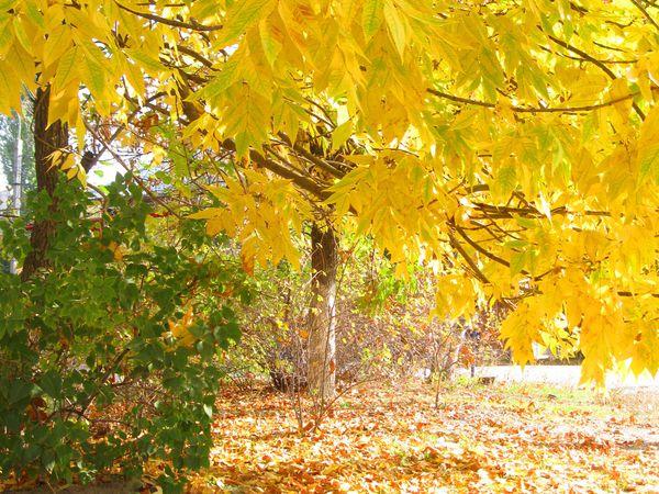 Прогулка под золотым листопадом, лирическое отступление   Ярмарка Мастеров - ручная работа, handmade
