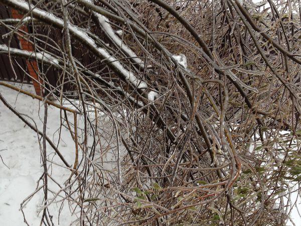 Ледяной дождь - 2! Прям ужастик какой-то....   Ярмарка Мастеров - ручная работа, handmade