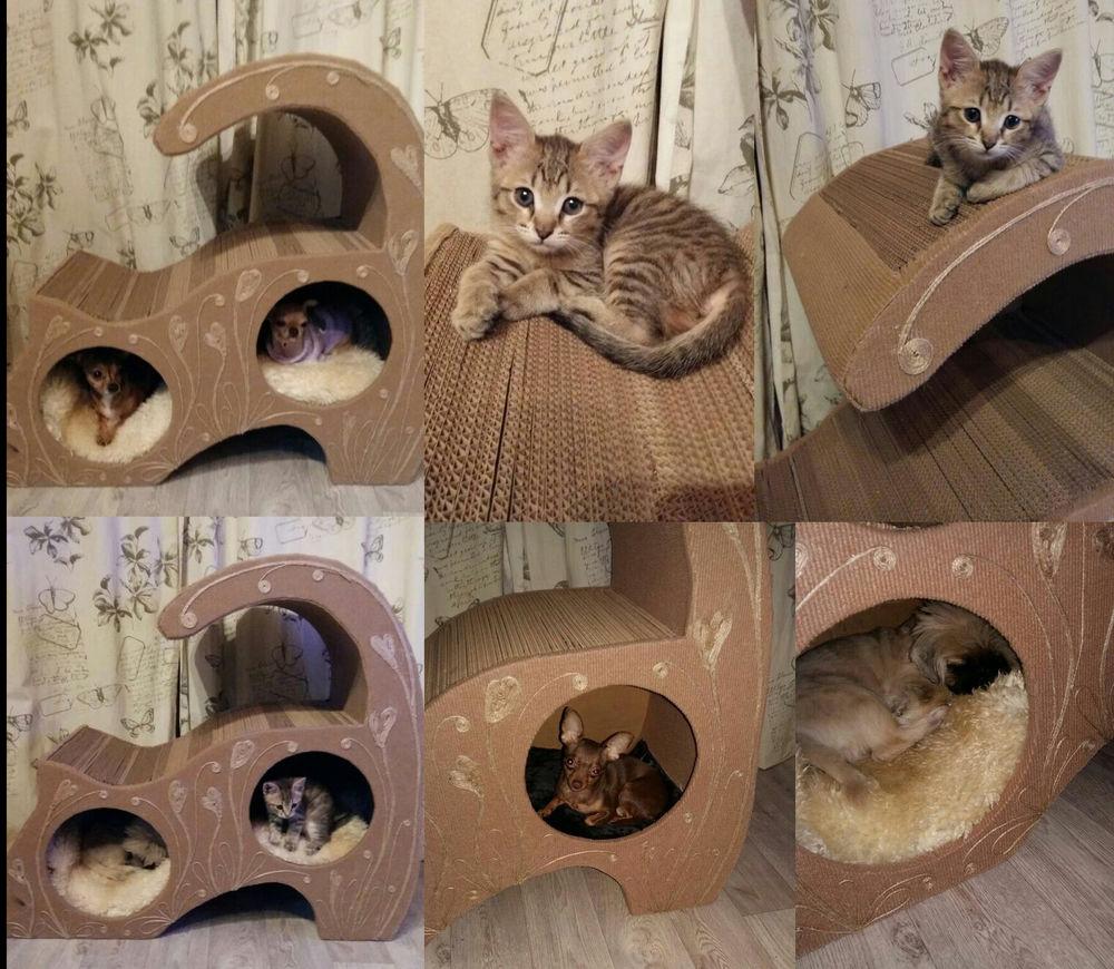 чихуахуа, дом для кошки, мелкая собака