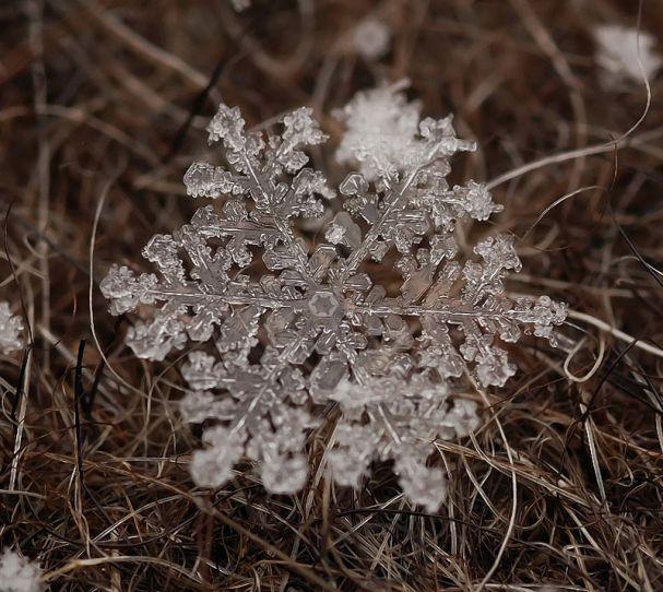 тайная жизнь снежинок