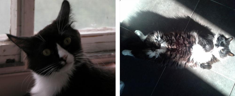 истории, кошки, поддержка