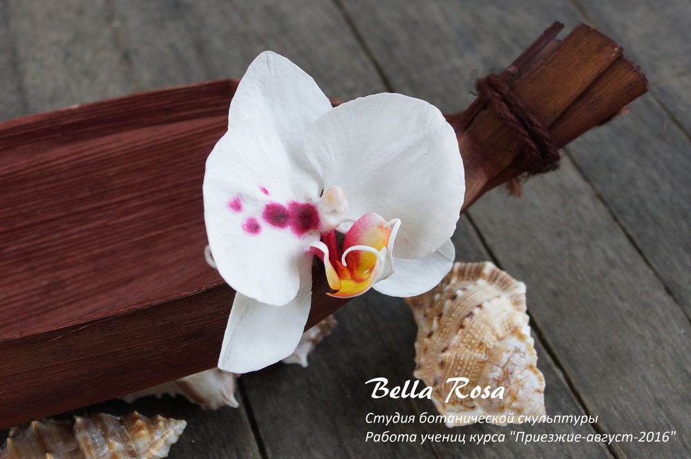 керамическая флористика, лепка из глины, школа лепки цветов, фаленопсис