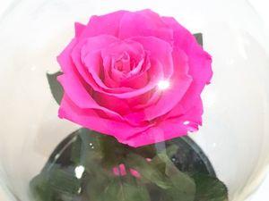 Роза в колбе со скидкой 40%. Ярмарка Мастеров - ручная работа, handmade.