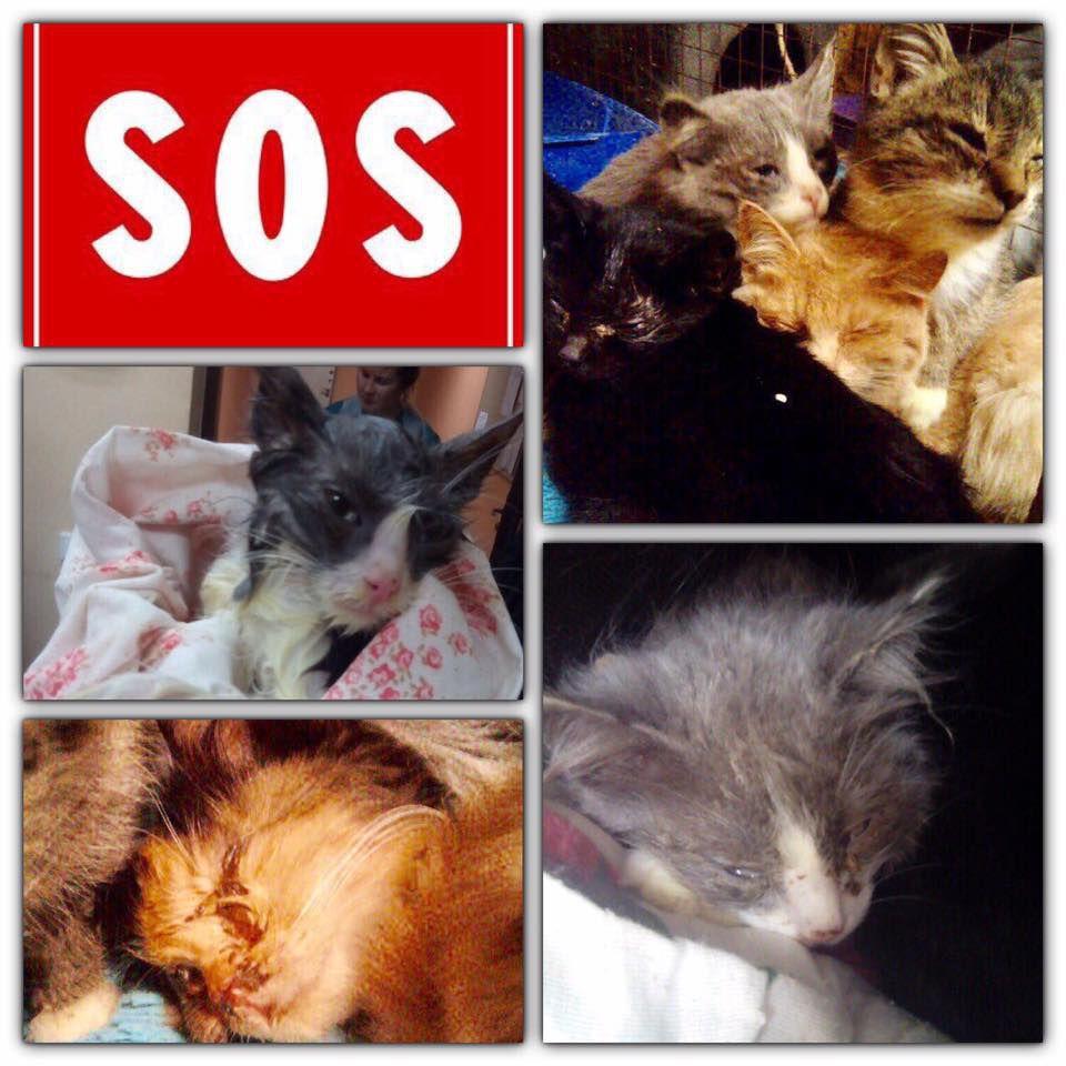 кошки, помощь животным, помощь кошке